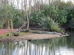 Kakadu Wetland, London Wetland Centre 2014